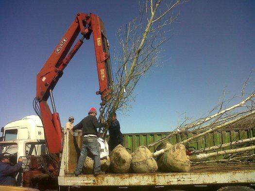 Nuevas grandes plantaciones del 2013