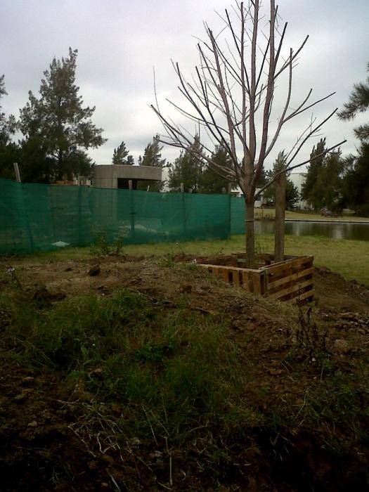 Primeras plantaciones en plena construcción de la casa